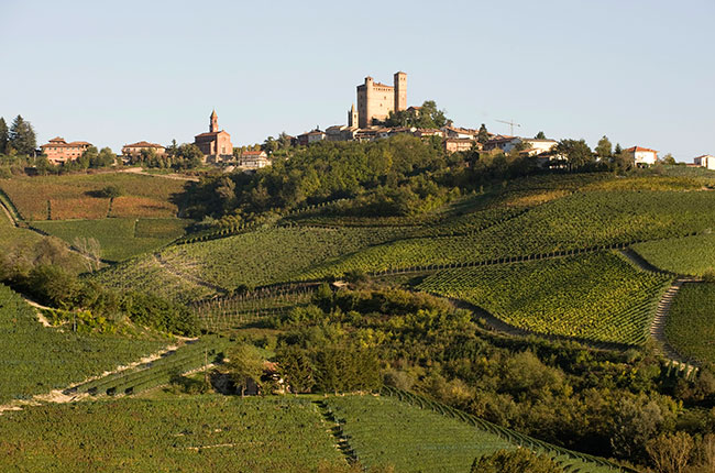 Vietti vineyards