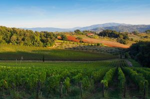 Bolgheri wineries