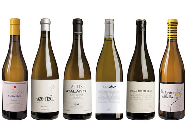 Galicia Panel Tasting northern Spanish white wines