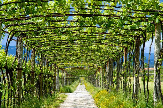 Travel: Driving northern Portugal's wine route