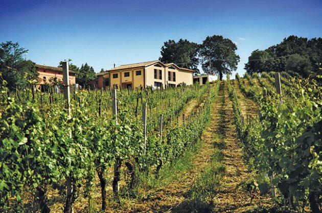 Le Marche wineries to visit