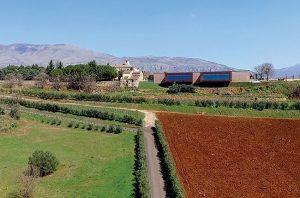 Ferrocinto vineyard
