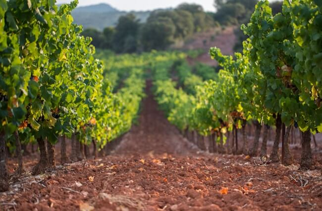 Schist wines versus limestone wines - Andrew Jefford - Decanter