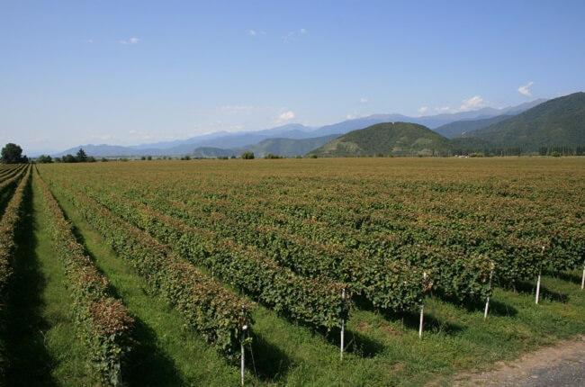 georgian wine, kakheti