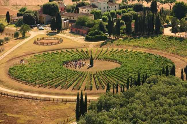 Vino Nobile di Montepulciano 2015 Capezzine