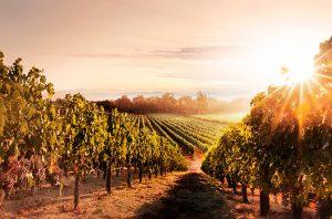 wine country movie napa
