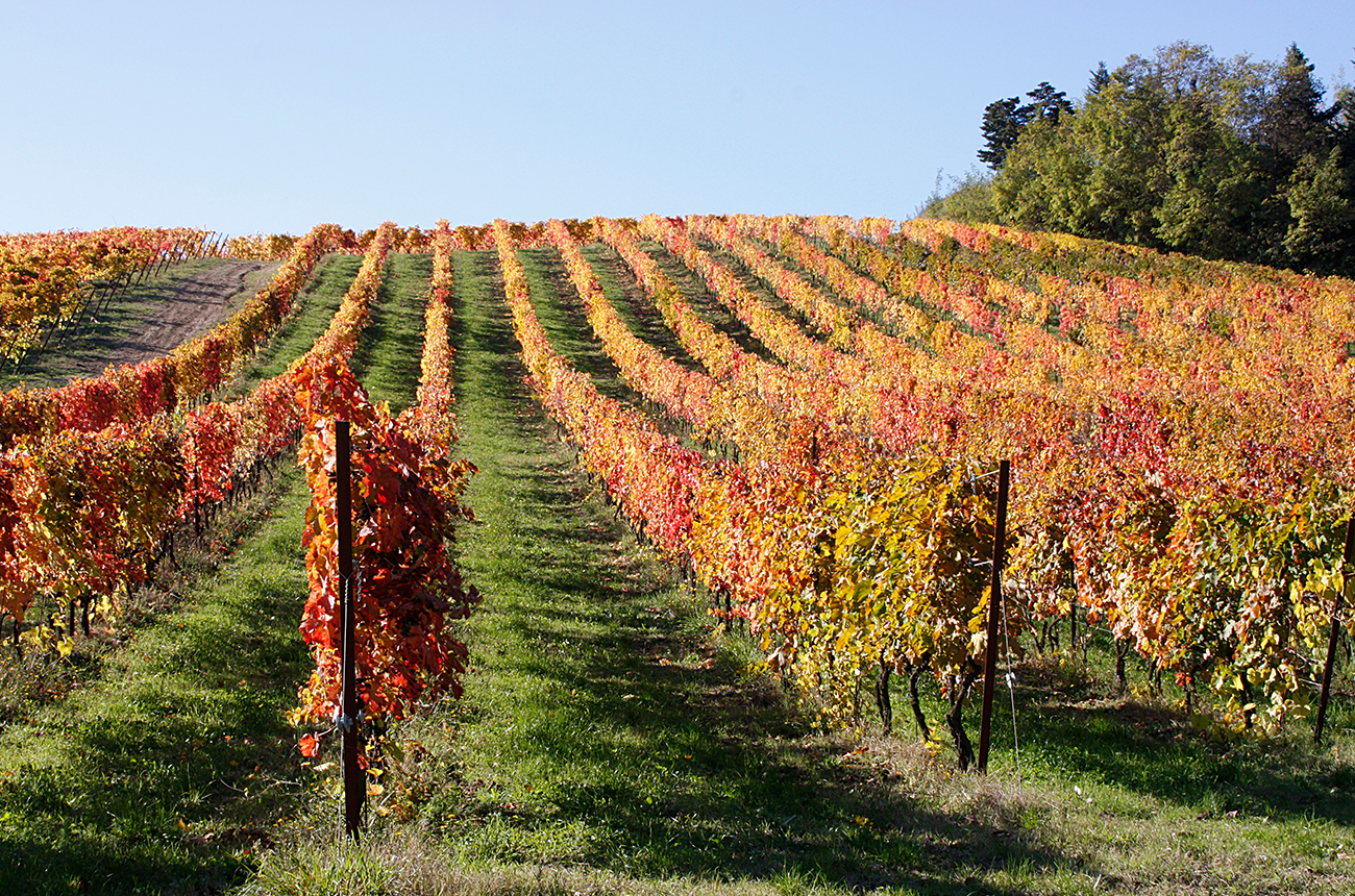 Travel: Le Marche wineries to visit - Decanter