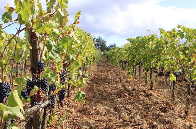 Calabria wine producers