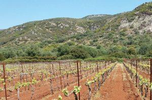 Kefalonia wineries
