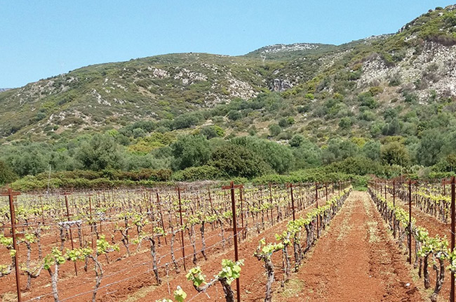 Kefalonia wineries