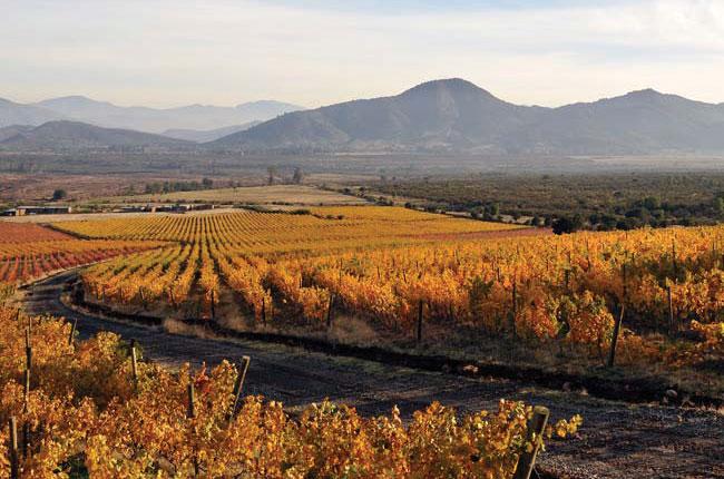 Koyle vineyard