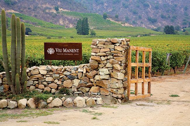Viu Manent vineyard, Colchagua producers
