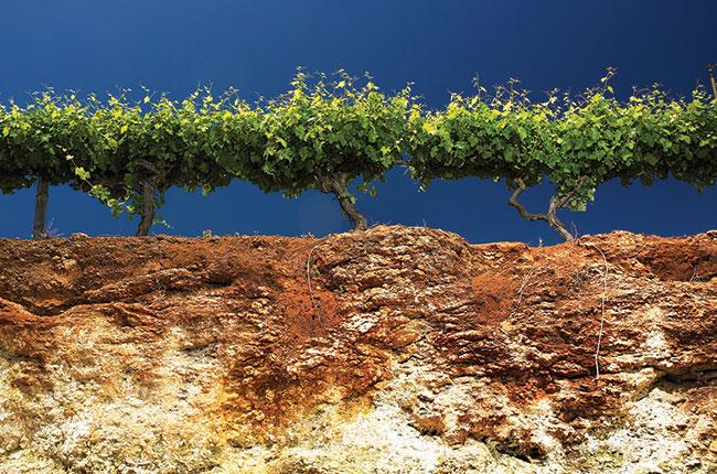 Katnook coonawarra terra rossa soil