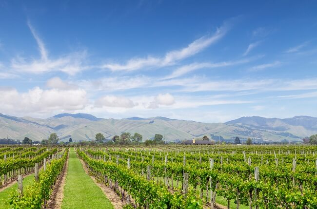 New Zealand 2017 white wines: A vintage recap and what to try