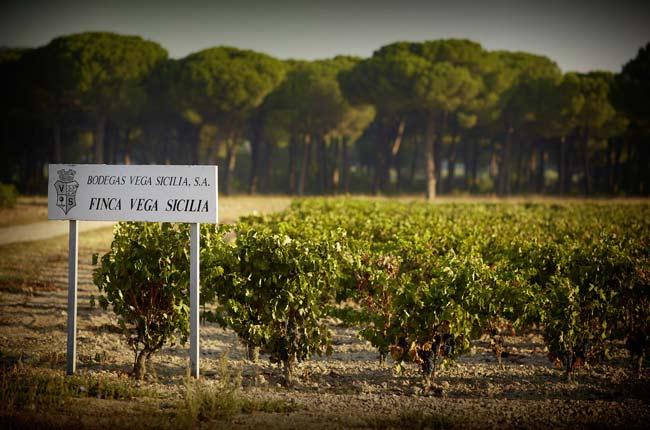 Vega Sicilia Valbuena Vertical