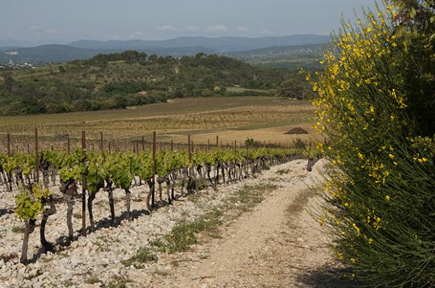 Capion wines