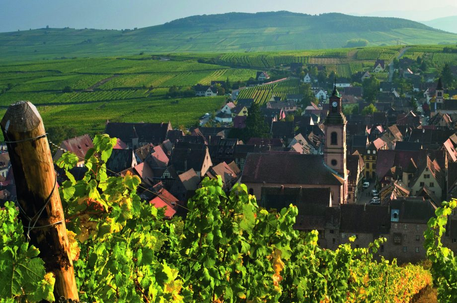 Schoenenbourg vineyards above the medieval historic village of Riquewihr Route des Vins Alsace France