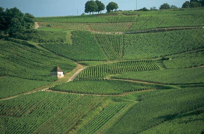 jura wine, chateau chalon