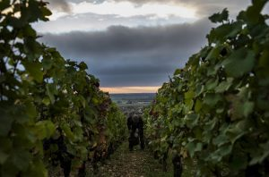 nuits-st-georges vineyards