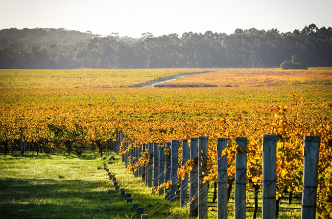 Vasse Felix buys Watershed