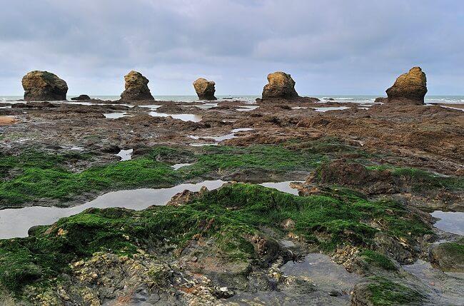 algae vineyard