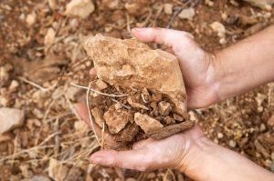 vineyard soils