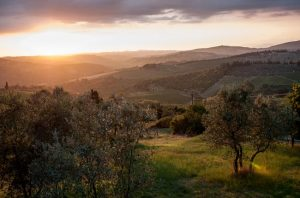 Best Italian Vineyards