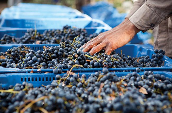 Signature South America grapes