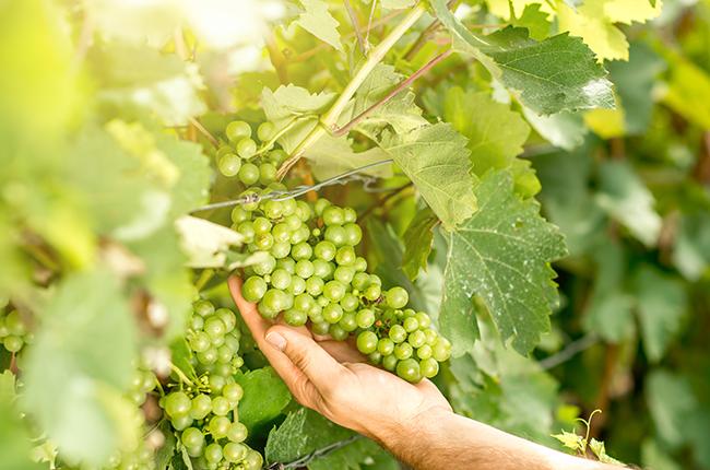 Green harvesting
