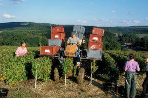 champagne harvest 2018