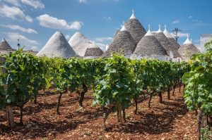 southern italy wines, puglia