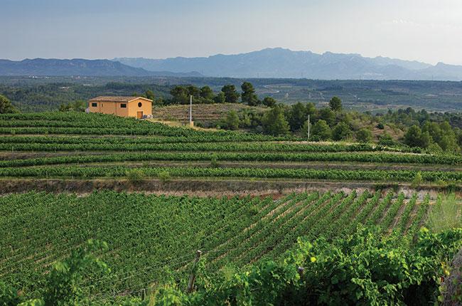 Clos Galena vineyard