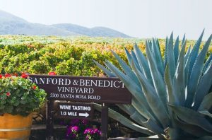 Top santa barbara wines