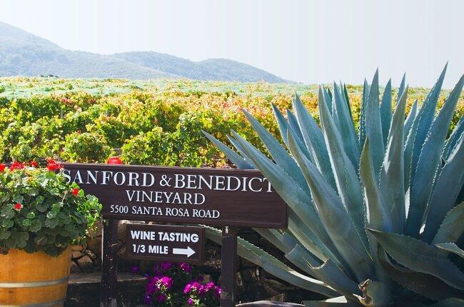 Top santa barbara wines