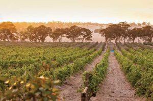 Shiraz Wine Australia