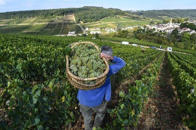 Burgundy 2018 vintage inspires optimism among producers - Decanter