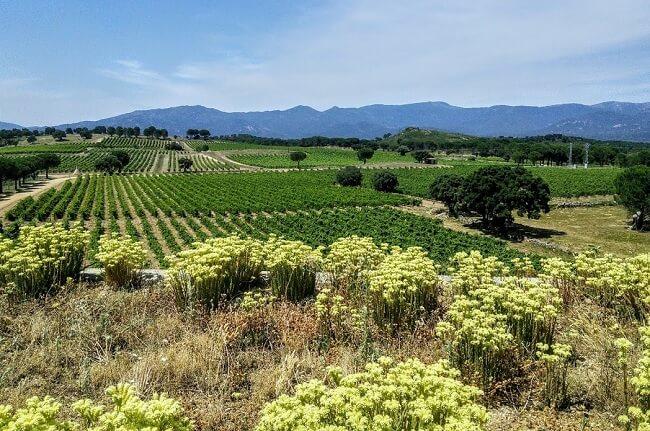 Terra Remota wines