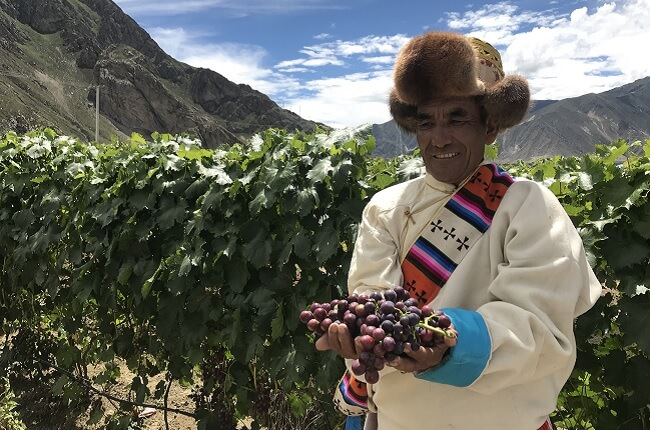 world's highest vineyard