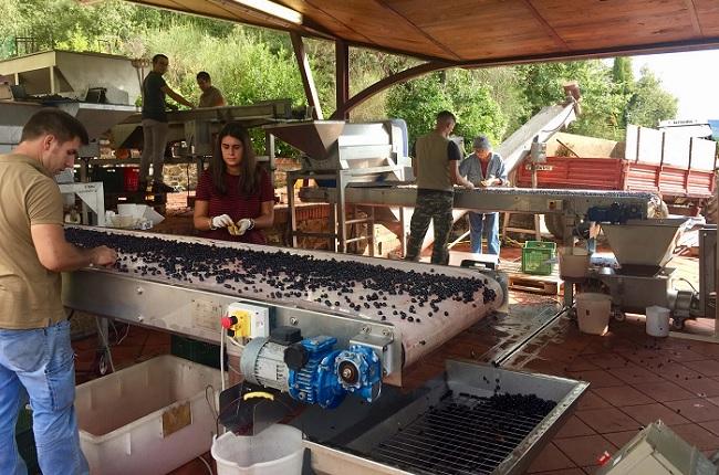 Tuscany 2018 harvest