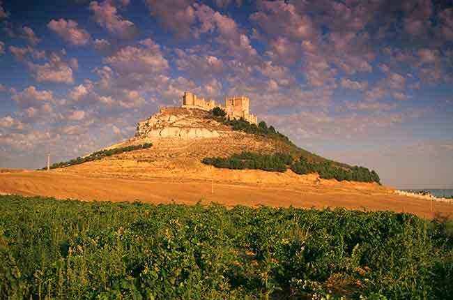 Castilla y Leon wines