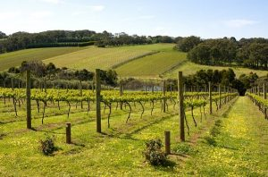 mornington peninsula pinot, chardonnay