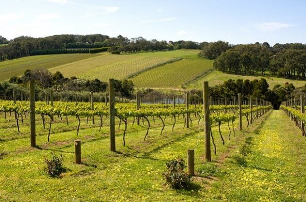 Top Mornington Peninsula Pinot Noir and Chardonnay wines