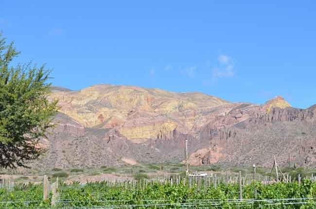 Quebrada de Humahuaca vineayrds