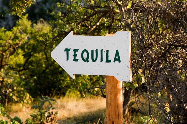 Learn about Tequila: Everything you need to know