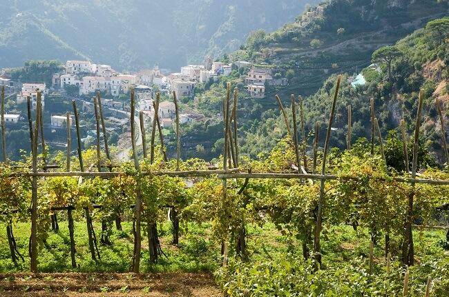 campania wines, amalfi