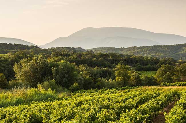 Ventoux wine