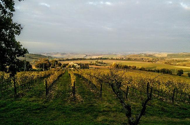 brunello wine, Andrew Jefford