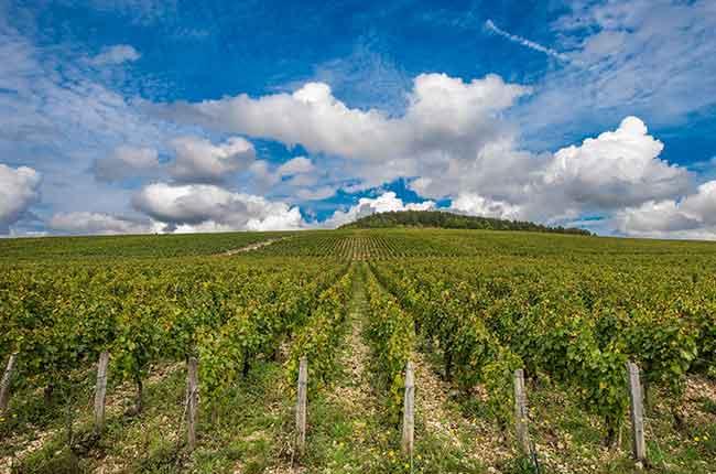 Burgundy 2017 en primeur