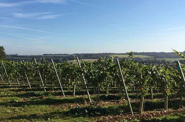plant UK vineyards