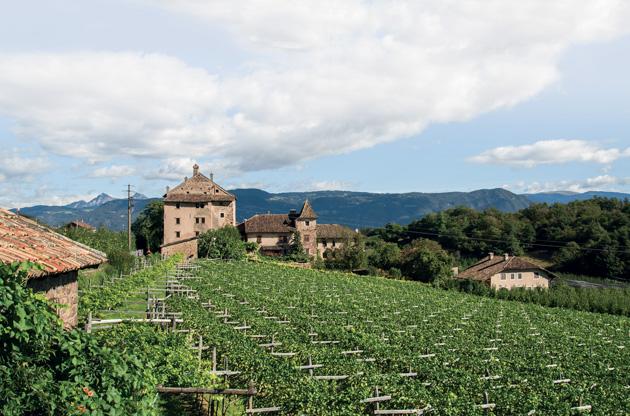 Eppan South Tyrol Italy, Pinot Bianco Italy